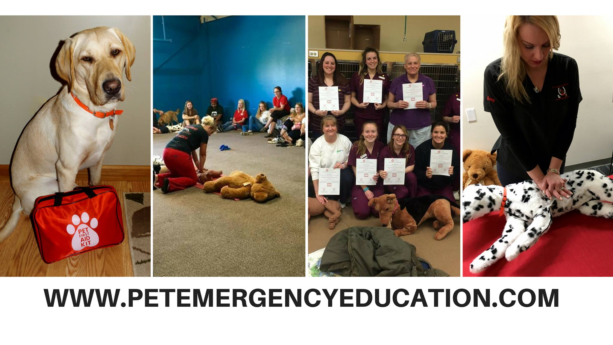 Pet Cpr And First Aid Certification Class Bow Chika Wow Town