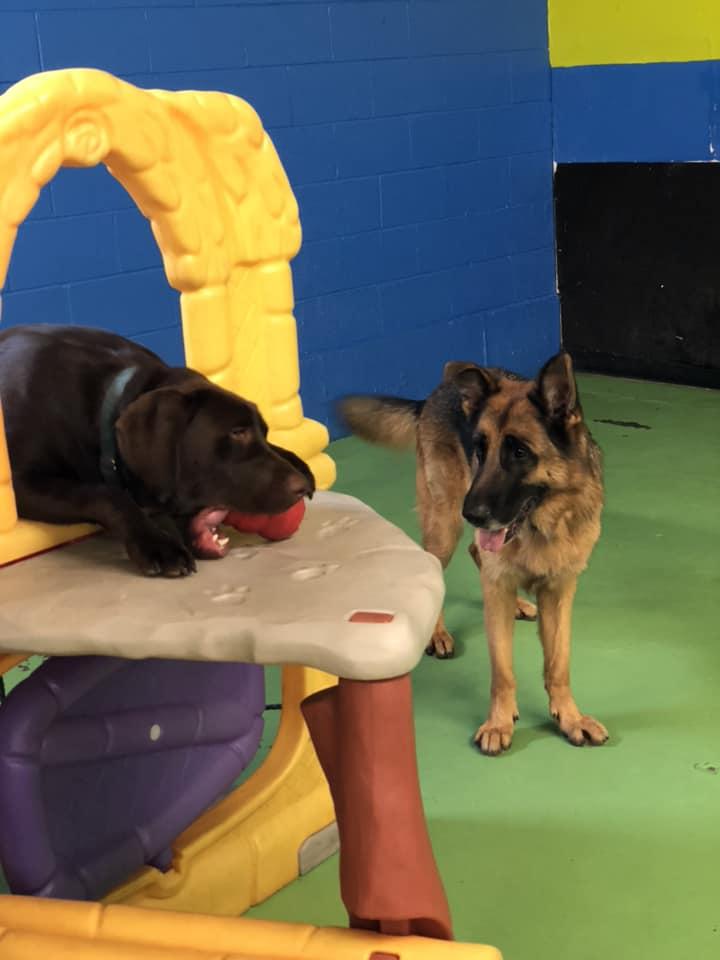 Warwick Indoor Dog Park